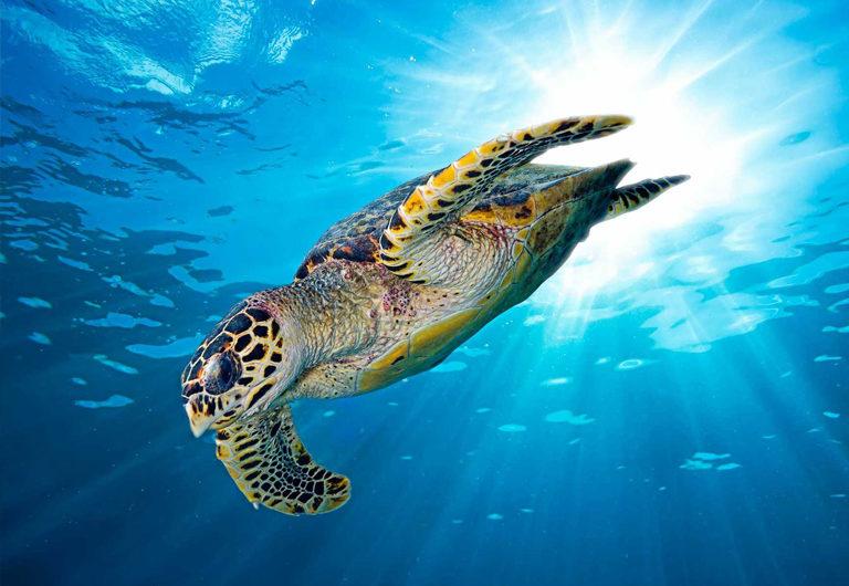 50 видов животных, находящихся под угрозой исчезновения