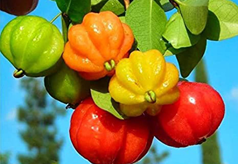 Редкие экзотические фрукты и страны, где их можно найти