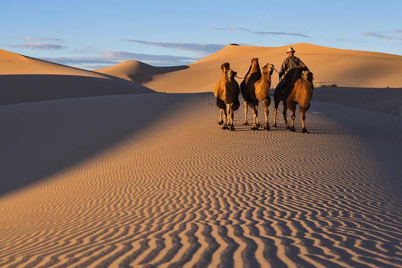 Покатайтесь на верблюдах в пустыне Гоби