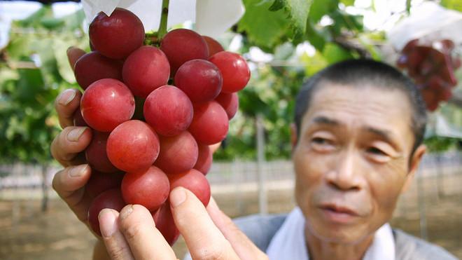 """Виноград """"римский рубин"""""""