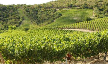 Самые лучшие виноградники в мире в 2020 году