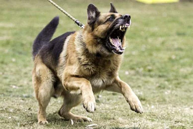 6 самых опасных в мире пород собак