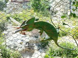 Природный парк Биотопои