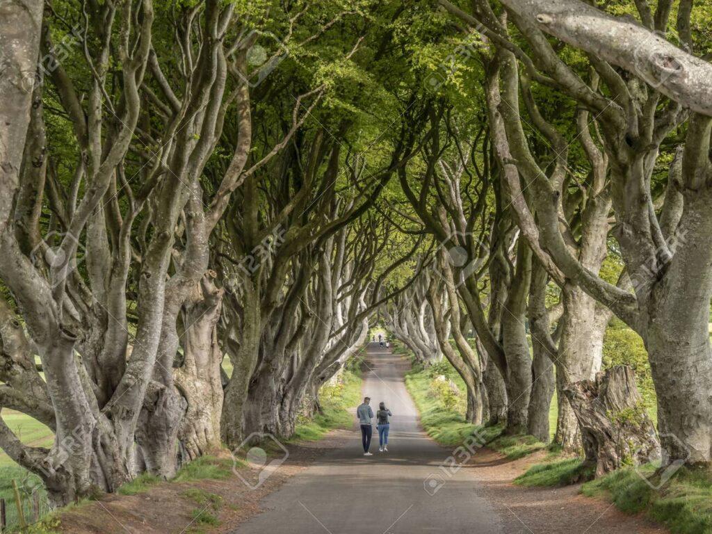 Темные изгороди, Странокум, Северная Ирландия
