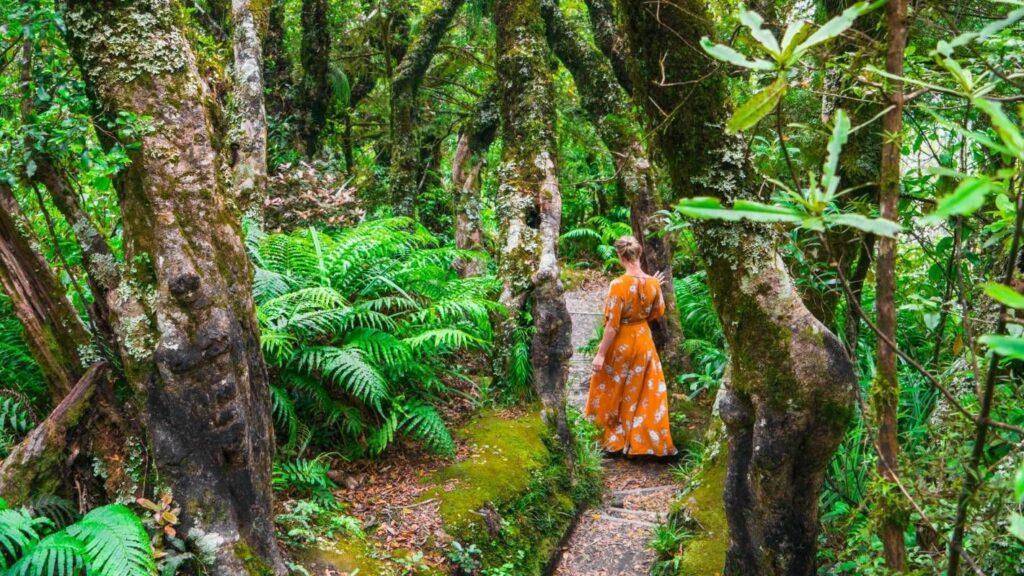 Лес гоблинов, Новая Зеландия