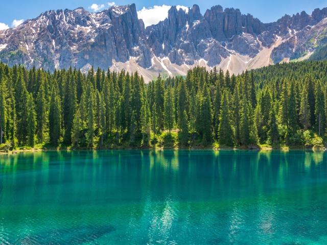 Лес Чистого озера, США