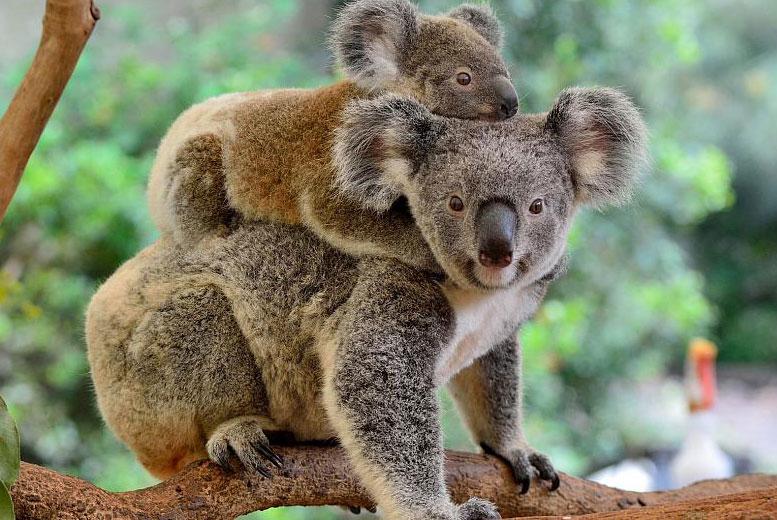 Почему в Австралии так много странных животных?