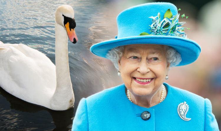Монарх владеет всеми дельфинами, лебедями и китами в Великобритании