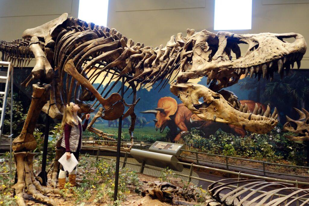 Вид динозавров не был в упадке, когда прилетел астероид