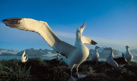 10 удивительных животных, обитающих в Антарктиде