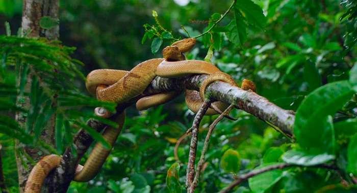 Змеиный остров (Бразилия)