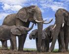 Как ритуалы животных могут помочь объяснить поведение людей