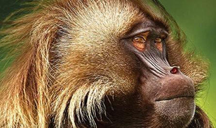 12 лучших документальных фильмов Би-Би-Си о животных