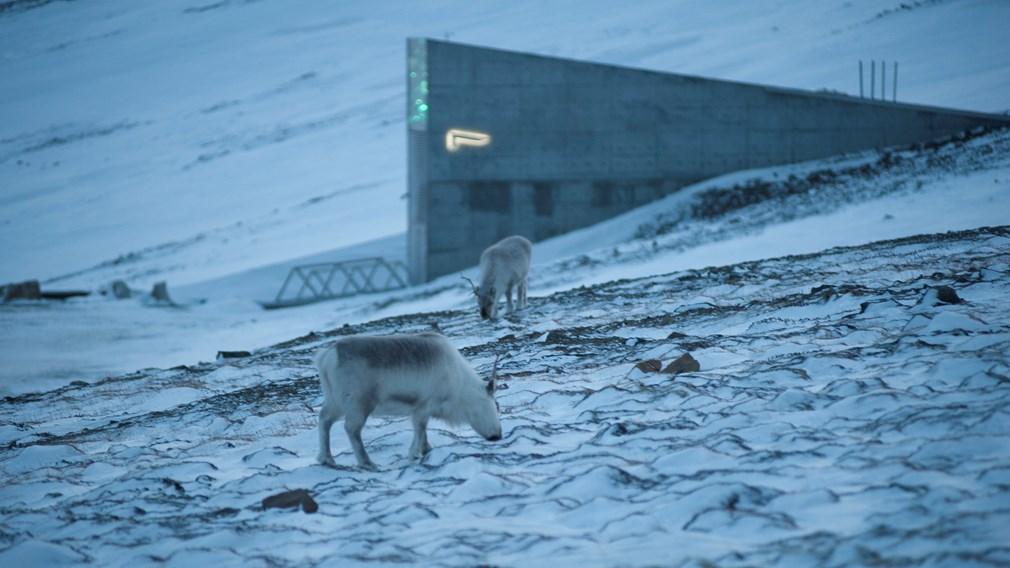 Всемирное семенохранилище (Норвегия)