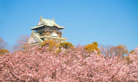 12 городов, где можно полюбоваться цветением вишни
