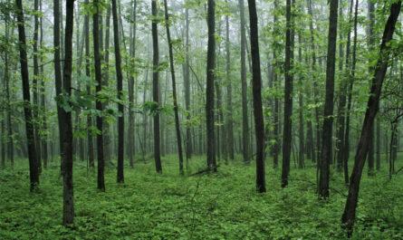 11 удивительных фактов о деревьях