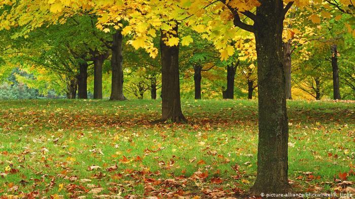 """Деревья """"мигрируют"""", чтобы избежать изменения климата"""
