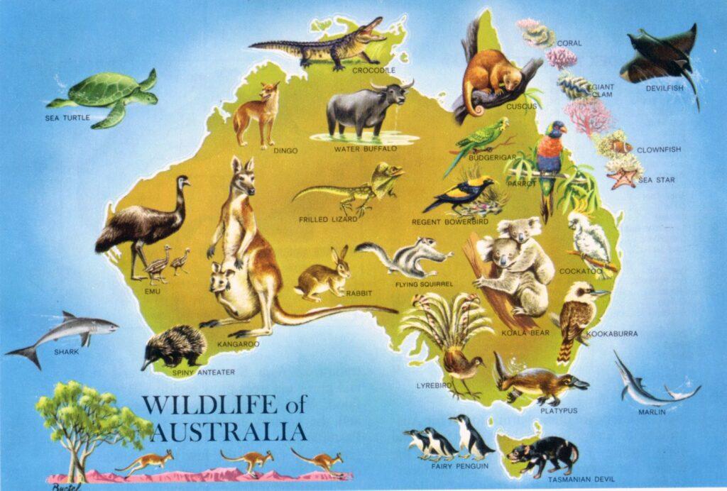 В Австралии обитает множество уникальных животных и птиц