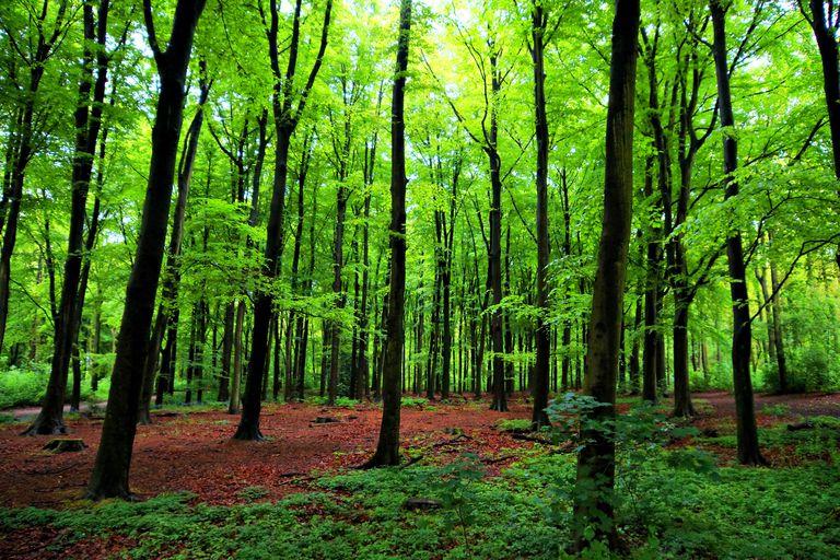 """Деревья """"разговаривают"""" друг с другом"""