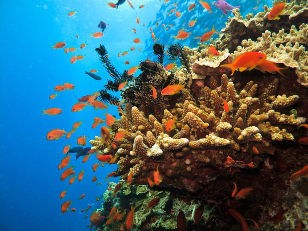 Самая большая экосистема в мире - Большой Барьерный риф
