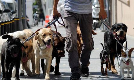 Лучшие города мира для путешествия с собакой