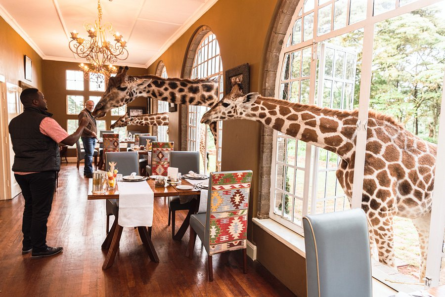Усадьба жирафов, Кения