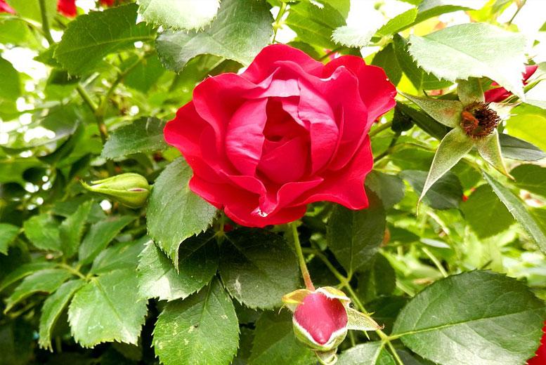 Знаете ли вы национальные цветы разных стран?