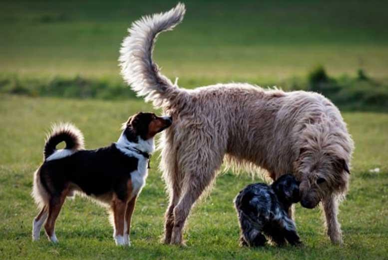 6 самых странных собачьих инстинктов
