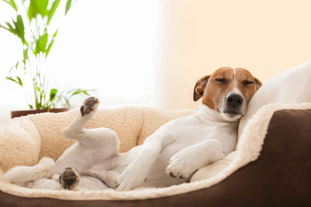 Почему собаки бегают по кругу перед сном?