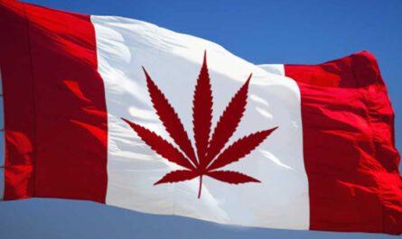 Информация о конопле для тех, кто едет в Канаду