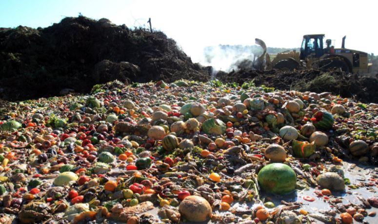 Почему существуют отходы и потери продовольствия и как их сократить?