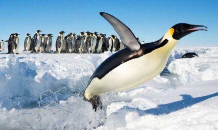 ТОП-10 самых крупных птиц в мире